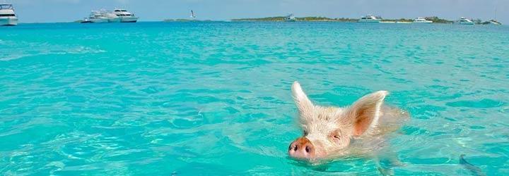 Beste reistijd Bahamas
