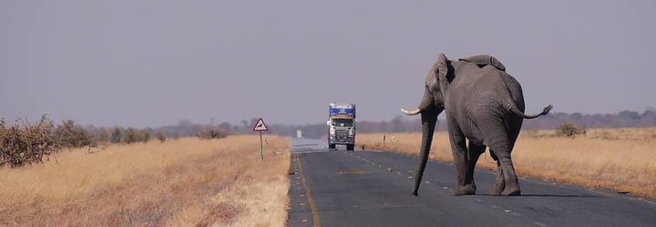 Beste reistijd Botswana