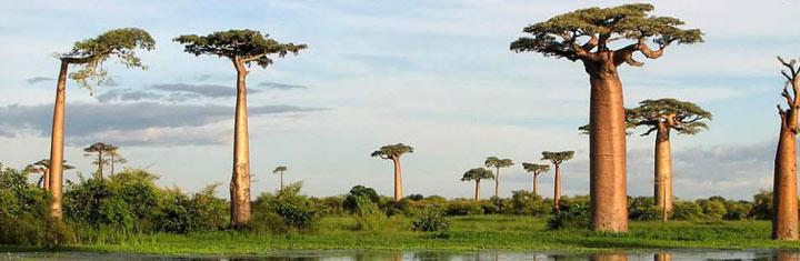 Beste reistijd Madagaskar