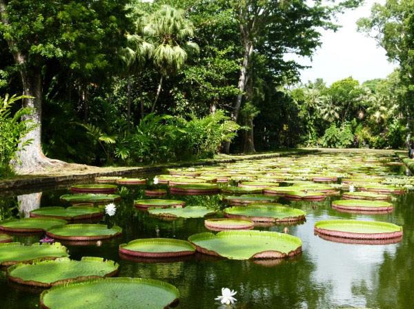 Top 10 bezienswaardigheden Mauritius Pamplemousses